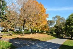 L'automne Montréalais