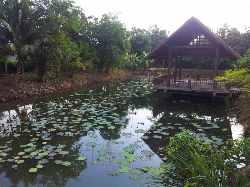 L'interview de Thibaut, en Thailande