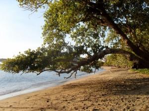 plage des 3 baobabs (dans le sud)