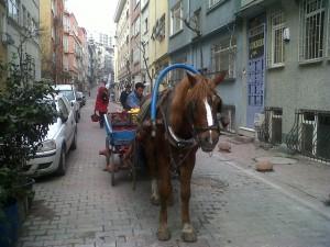 Vendeur de fruits à cheval