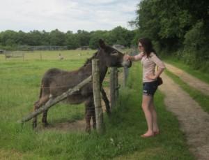Rencontre avec un âne à la Domaine de la Petite Couère
