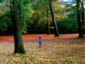 La forêt de Palingbeek, en Belgique