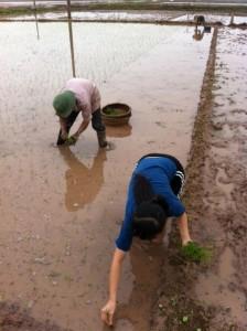 Repiquage du riz chez mon amie Hà