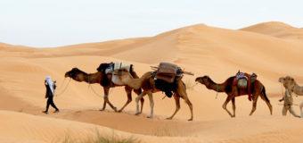Conseils pratiques pour découvrir la Tunisie