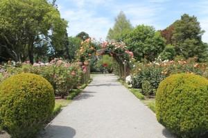 """Le jardin des roses dans le jardin botanic de Christchurch, surnommée """"Garden city""""."""