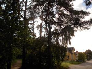 Maison typique suédoise dans la forêt